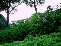 【写真】VQ3007で撮影した朝の風景(庭木越しの団地)