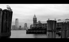American Tune (2) (Mister-H) Tags: nyc usa newyork dock fanny nb mouette virela virela2 virela3 virela4 virela5 virela6 virela7 virela8 virela9 virela10