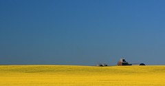 Early Morning on the Prairie (Ken Yuel) Tags: color manitoba blueskies prairies canola farmbuildings golddragon canolafields mywinners abigfave ultimateshot goldstaraward multimegashot digitalagent manitobalandscape