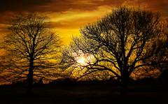 Into the night (Gary*) Tags: trees sunset sky orange sun clouds bravo silhouettes lovephotography xxxooo 40d hakaglw