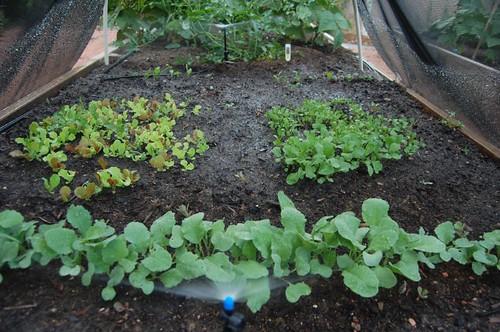 Shade cloth gardening