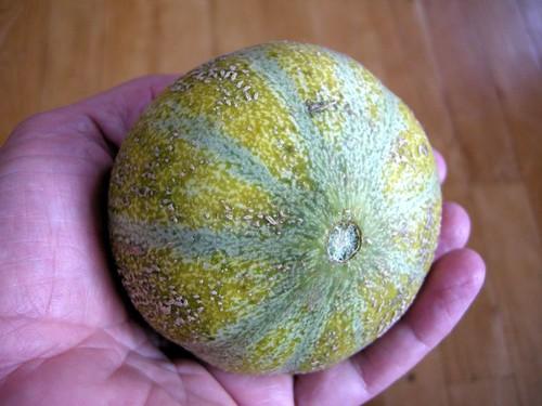 melon1648