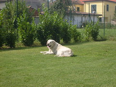 Cane da guardia xD (Wind of change.) Tags: dog grass cane dana erba prato