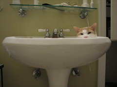 Squinty Eyes (rootcrop54) Tags: cat ginger chat otis tabby gato chan neko  macska gatto kot nekochan koka kedi chatte katt kissa kttur maka kucing   kat  maek kais inthesink gorbe pisic