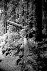 tree0006 (kyleormsby) Tags: film olympusstylusepic kodaktmax