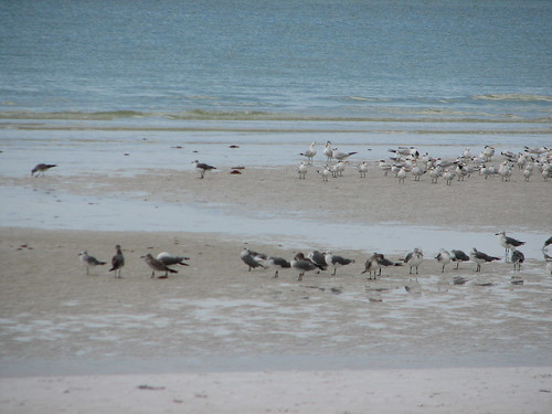 lots of birds today