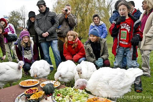 Celebration FOR The Turkeys by Farm Sanctuary.