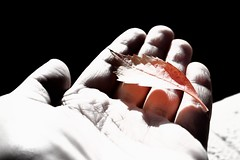 #5 :: Free Your Mind... (SonOfJordan) Tags: light shadow blackandwhite bw canon blackwhite leaf emerson noiretblanc quote amman jordan imagination xsi 450d  samawi sonofjordan shadisamawi  wwwshadisamawicom