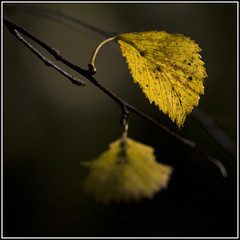 Limelight (strussler) Tags: england yellow canon woodland eos countryside leaf zoom sigma surrey apo trail 5d northdowns 70300 surreyhills wotton aworkofart fineartphotos salveanatureza lesamisdupetitprince