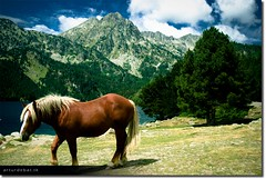 Wild life (arturii!) Tags: life park blue trees wild camp sky horse costa brown white mountain lake tree green nature water face field sport clouds wow landscape coast amazing bravo europa europe natural superb awesome cara cel natura catalonia national stunning vegetation catalunya blau arbre sort blanc aigua catalua muntanya verd lightroom llac pirineus nuvols lleida paisatge taca prat espot estany catalogne balu aiguestortes polarize impresive santmaurici marro caball vora ineteresting salvatge canoneos400d infinestyle onlythebestare arturii polaritzat arturdebattk fotophotocapturecapturamomentquietviewpeacefulpeacepau