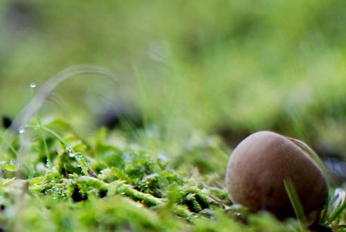 i <3 acorns