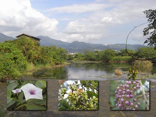 你拍攝的 12生態水池。