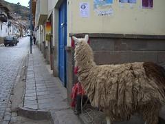 CIMG2064 (zoomcharlieb) Tags: peruvianimages