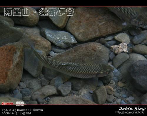你拍攝的 20081115數位攝影_阿里山之旅176.jpg。