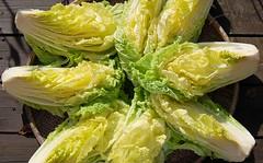 08-11白菜1