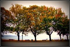 Tree Line (Mark Faviell Photos) Tags: autumn trees english fall vancouver bay bc seawall mywinners mywinner goldstaraward