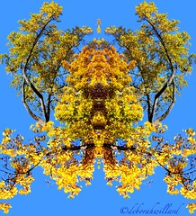 froggo (DebDubya) Tags: blue autumn reflection fall leaves yellow symmetry foliage symmetrical mirrorimage inkblot rohrshach bej goldstaraward