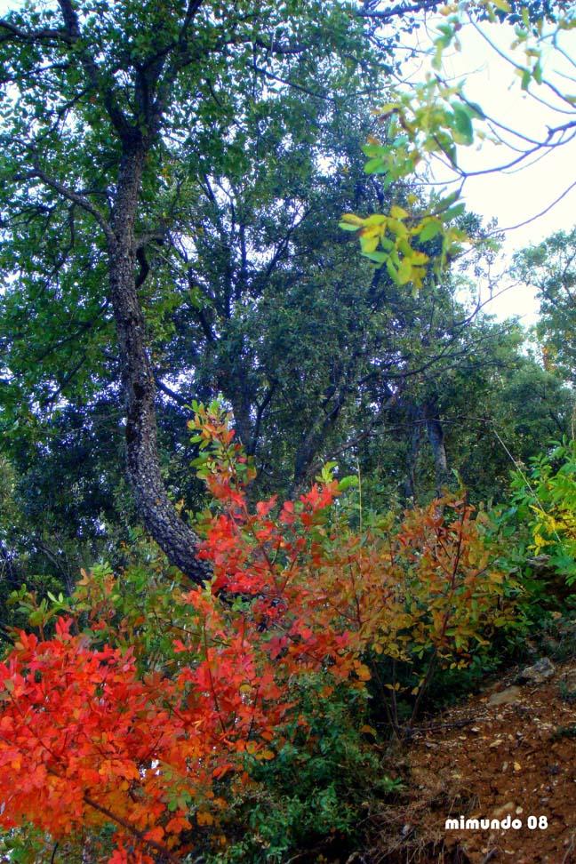 El bosque encantado...