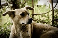 IMG_2198-lr (madwolfmusic) Tags: fauna timberland