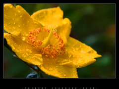 """6400 isos - fleur - for """"Sony Alpha amazing High ISO shots"""" group (thierry.courosse (busy !!! totally !!!)) Tags: france flower macro fleur f71 105mm iso6400 1640s sigma10528macro colorphotoaward sonya700"""