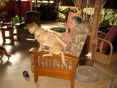 IMG_1453.JPG (traversbelize) Tags: pets dogs bowdoin viapixelpipe