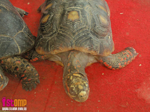 Difference between tortoises and turtles