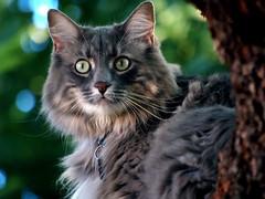 Marley Wide Eyes (joecrowaz) Tags: arizona cats pets animals supershot bestofcats kittyschoice catmoments vosplusbellesphotos alittlebeauty boc0709