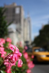 Empire State (Doidge) Tags: city nyc flowers usa newyork canon photo flickr bokeh broadway picture september photograph empirestatebuilding 1855mm 2009 flatiron flickrcom nyctaxi doidge 450d