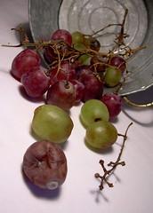 Still life gone bad... (ElbtheProf) Tags: stilllife vine grapes bunch rotten decaying mouldy galvanisedpot