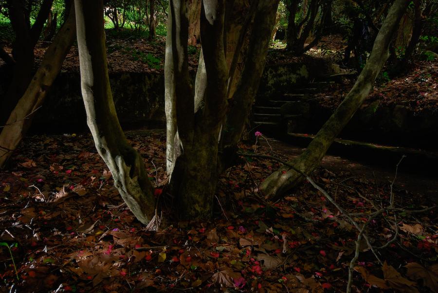 Árvore II