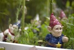 thumbs up! (nocklebeast) Tags: santacruz george gnome bush thumbsup pointyhat gardengnome pointyears nrd yardgnome voigtlandernokton50mmf15 scphoto bushgnome freedomisonthemarch plantcontainter