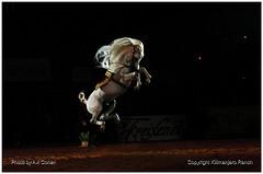 sicab-2006-059 (kilimanjaroranch) Tags: horse spain demonstration spanish pre equestrian stallion andalusian dressage sicab