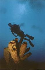 Bonaire 2000 (tselliot3) Tags: machu pichu