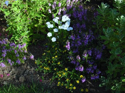 garden shots aug 08 011