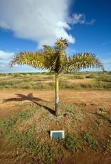 Carnarvon, Australia (C) 2008