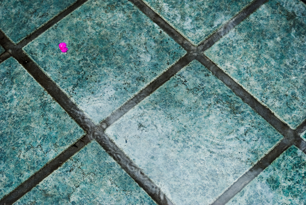 Wet Squares & Lone Flower Petal, August 11th