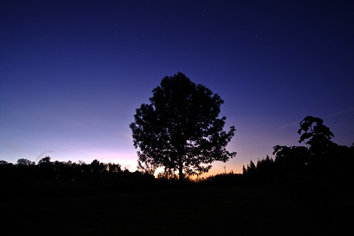 Back Yard After Dark (by john_brainard)
