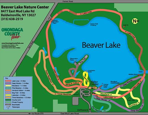 map_beaver_lg