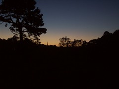 Kerikeri sunset (- MattW -) Tags: trees sunset newzealand sky travelling backpacking northisland bayofislands kiwi aotearoa kerikeri