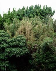 (hi-lite) Tags: green 160vc largeformat wista45