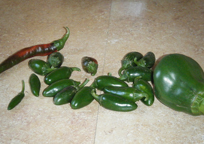 Peppers harvested from the garden.