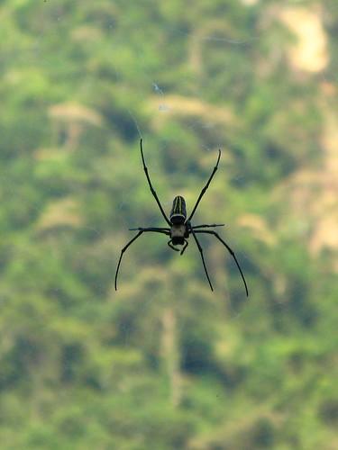 IMG_9379_spider