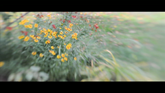 lensbaby video (mikefranklin) Tags: usa lensbaby iso200 video nikon vermont september hd montgomery 2008 hdvideo lensbaby20 d90