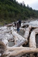 driftwood (alwang) Tags: tam truc