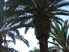 palme (anna bosiljka) Tags: palme supetar bra dalmatia08