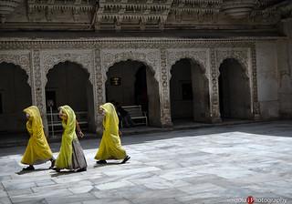 JODHPUR/yellow sarees III