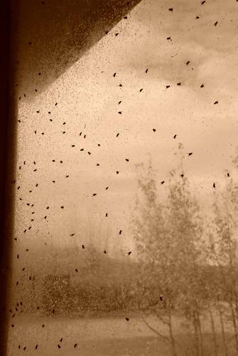 Pane of Flys