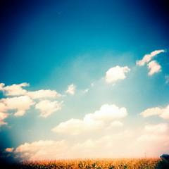 (Ilaria ) Tags: sky 6x6 clouds mediumformat holga xpro nuvole crossprocess toycamera cielo medioformato toycamerafotografiaanalogicaitalia fujisensiaii100ra sviluppoinvertito