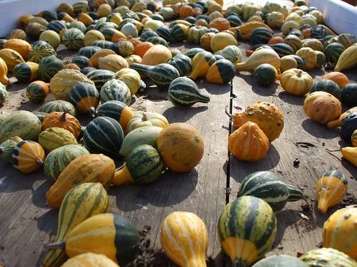 pumpkin stand 014