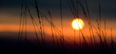 Silouette all'alba / Silouette at the sunrise (girasole87) Tags: autumn orange sun silouette sole autunno arancione cansiglio incontrianordest